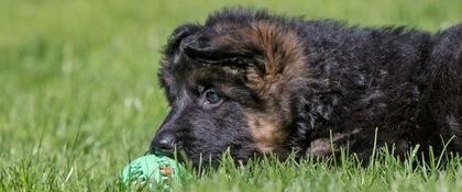 Pup bal groen