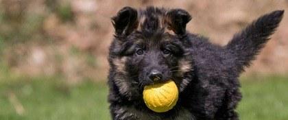 Pup gele bal