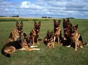 Honden op de Heide
