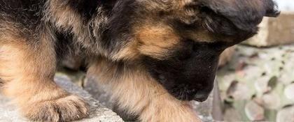 Pup stenen 1